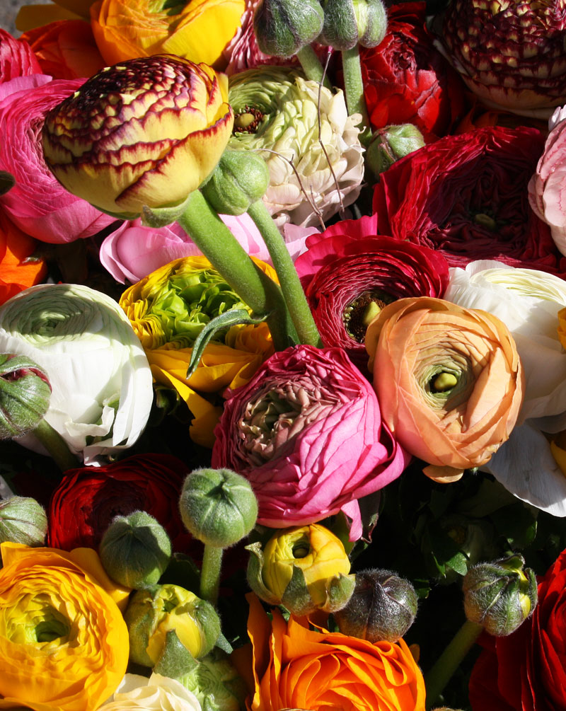 Social Media Workshop für Floristen am 11. Oktober 2018