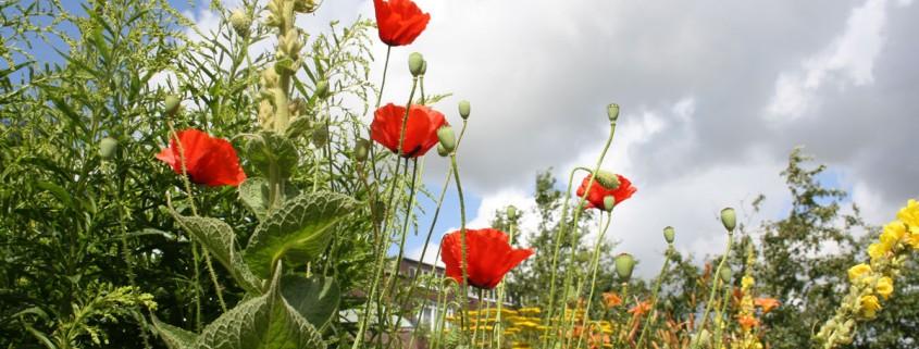 Blüten im Garten von Emil Nolde