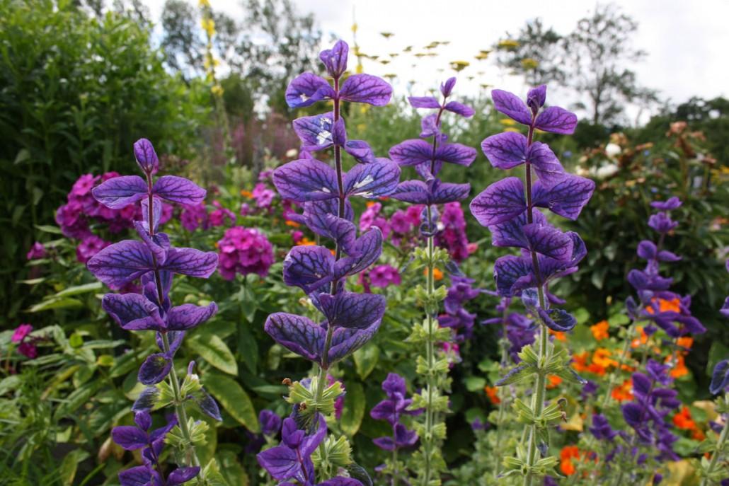 Blüten im Emil Nolde Garten, Seebüll