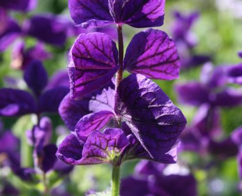 Blüten im Loki-Schmidt-Garten, Botanischer Garten Hamburg