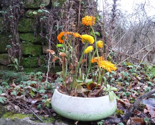 Ringelblumen und Ranunkeln, in der Natur platziert