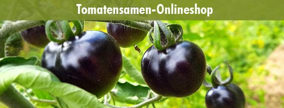 Tomatensamen Onlineshop