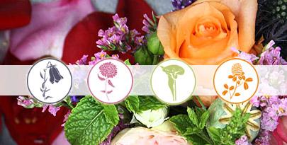Website für Einzelhandel Schaumburg Lippe